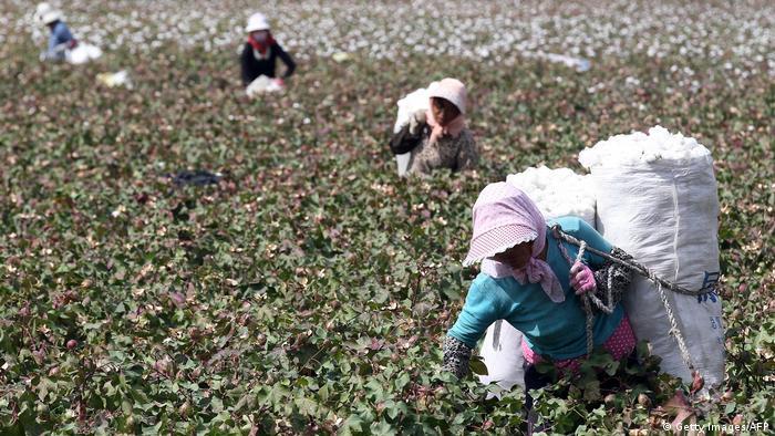 China Baumwoll-Anbau