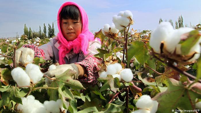 En el cultivo del algodón, se usa el 16 por ciento de todos los pesticidas a nivel mundial, según el Instituto Ecológico de Múnich.