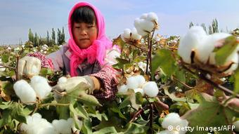 Una mujer recogiendo algodón.