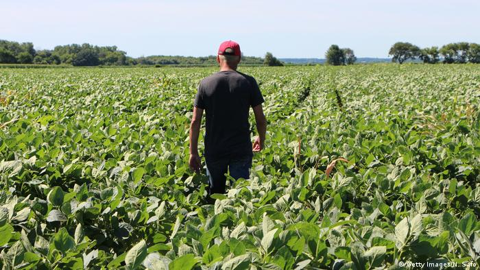 Un hombre caminando por un campo de soja.