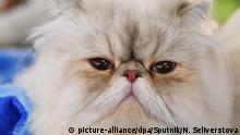 Russland Moskau | Cat-Salon-December Katzenschau