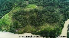 SOS-Signal aus Palmenbäumen