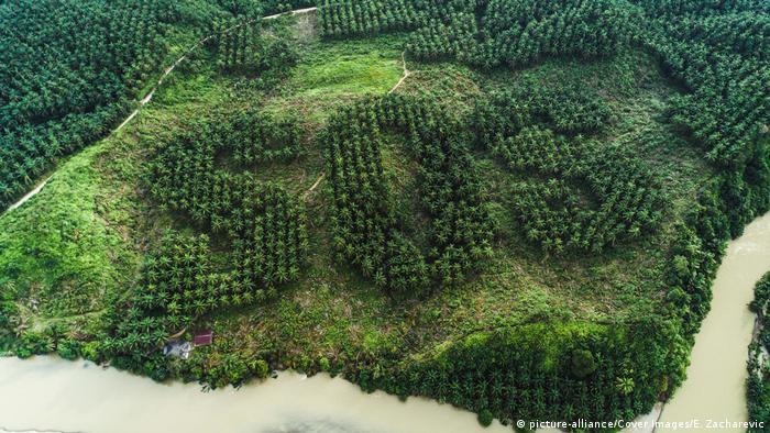 Una imagen aérea en donde los árboles forman la palabra SOS.