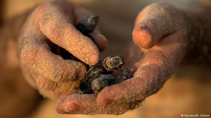 BdtD Israel Meeresschildkröten Rettungsstation