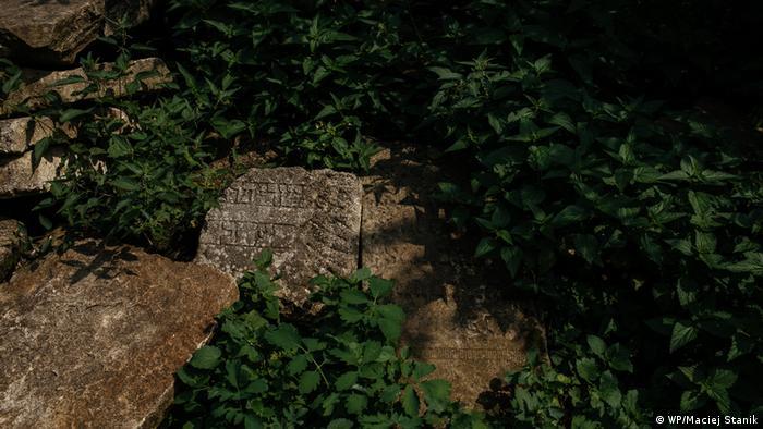 Po Żydach w Kołomyi zostały nagrobki, płyty porośnięte są mchem, przykryte liśćmi