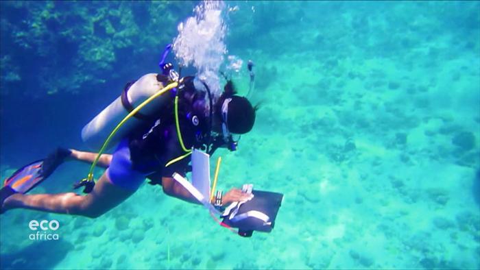 Un buzo en aguas de las islas Seychelles.
