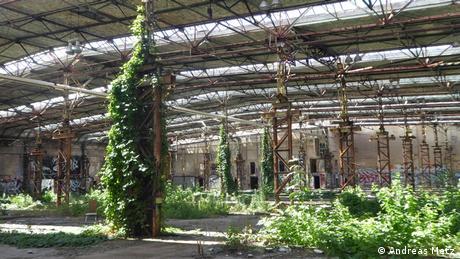 Vista interna de antigo pavilhão industrial tomado por plantas