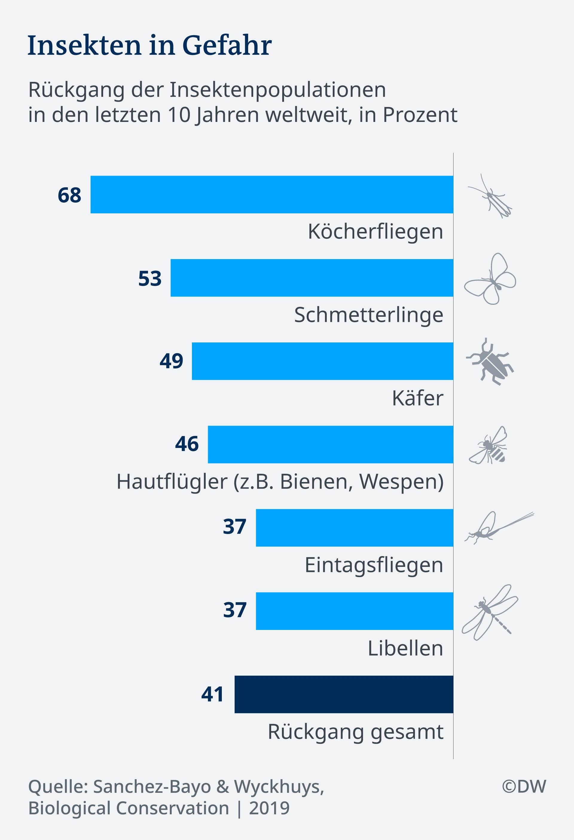 Infografik Insektensterben Rückgang Arten DE