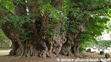 BdT, Deutschlands erster Nationalerbe-Baum
