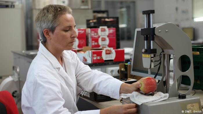 A scientist examines an apple in a laboratory (DW/T. Smith)