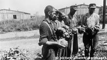 Nationalsozialismus: Konzentrationslager. Befreiung des KZ-Majdanek bei Lublin in Polen, durch Einheiten der 1. Weißrussischen Front, am 24. Juli 1944. Schädel ermordeter Häftlinge. Foto, um Juli 1944. |