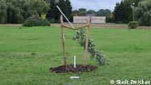 Deutschland Gedenkbaum für NSU-Opfer in Zwickau abgesägt