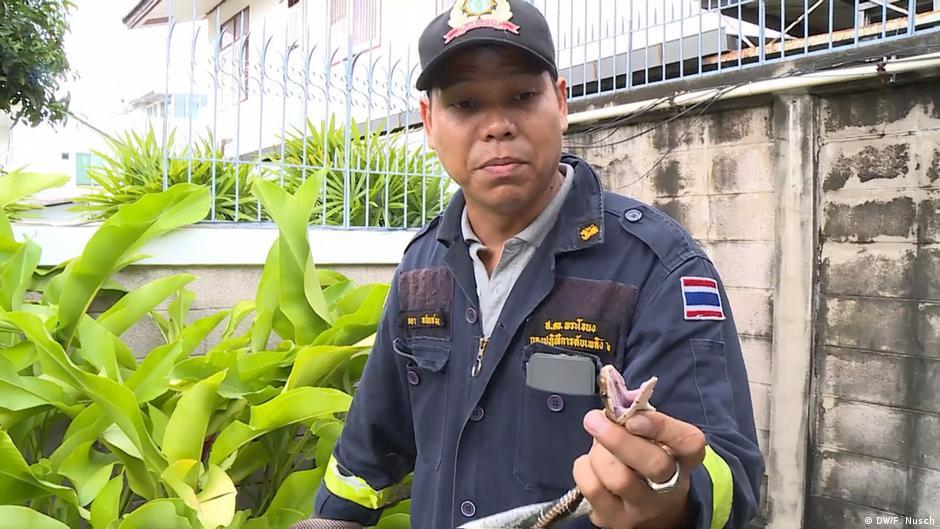Vorsicht Gift! Schlangenfänger in Thailand
