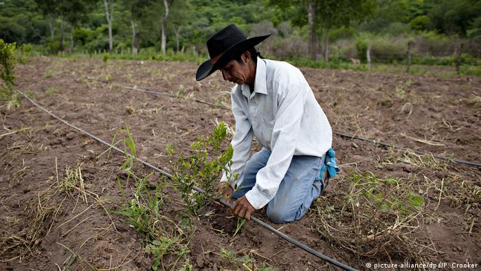 Bolivien Landwirtschaft