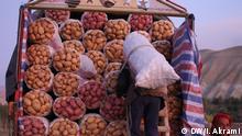 Afghanistan Kartoffelfarm in der Provinz Bamyan