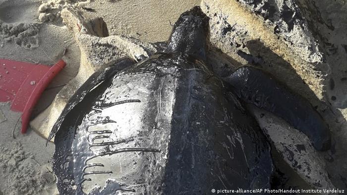 Carcaça de tartaruga coberta de óleo encontrada em praia de Fortaleza
