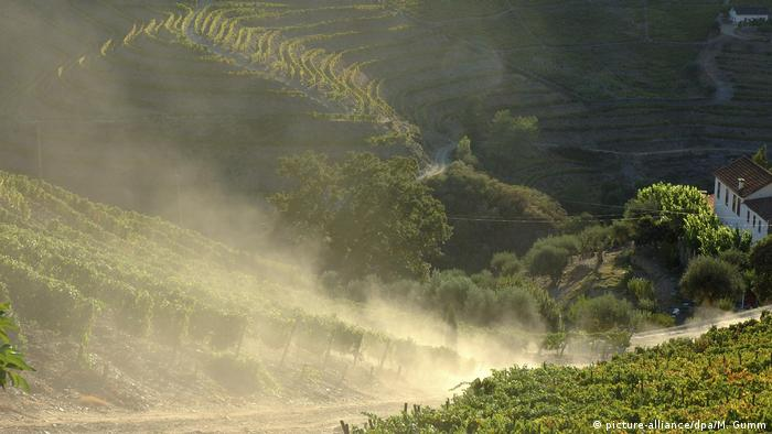 A dusty vineyard in Pinhao, Portugal (picture-alliance/dpa/M. Gumm)