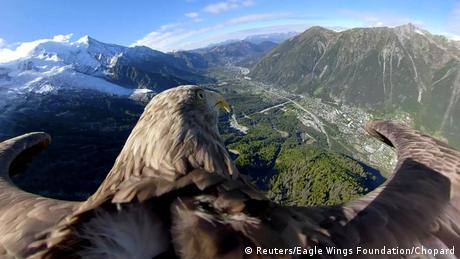 BdTD Frankreich Seeadler Victor fiegt über Gletscher und Berge in Chamonix (Reuters/Eagle Wings Foundation/Chopard)