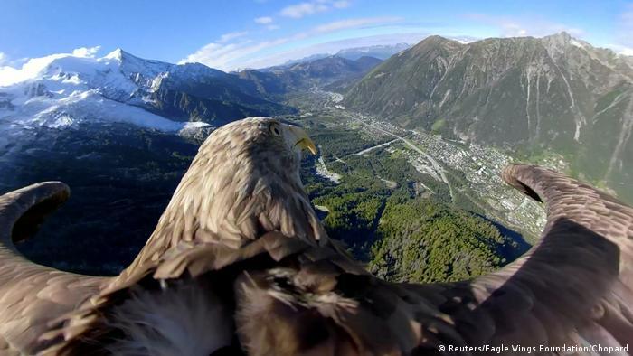 Con su vuelo sobre los Alpes, esta águila de 9 años llamada Víctor ayuda a documentar, por medio de una cámara de 360 grados, el deshielo de los glaciares alpinos. Siempre se lanza desde una cumbre, para aterrizar más tarde junto a sus cuidadores. La fundación Eagle Wings lo hace posible con el objetivo de que tomemos conciencia de las consecuencias reales del cambio climático en el planeta.