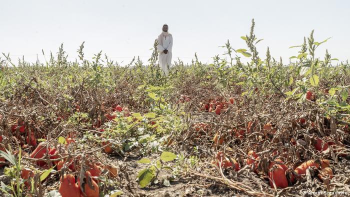 Filmstill aus Das Neue Evangelium: Ein Mann steht als Jesus verkleidet in einem Tomatenfeld