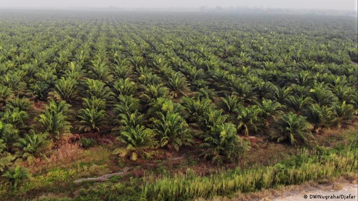Bekas hutan adat warga Rukam yang beralih menjadi perkebunan sawit