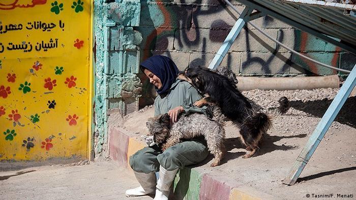 روز ۱۴ مهر روز دامپزشکی بود. در پناهگاه حیوانات زاگرس که در حومه شهر کرمانشاه واقع شده چندین دامپزشک فعالیت میکنند. این تیم پس از زندهگیری حیوانات، اقدام به درمان، انگلزدایی، واکسیناسیون و نیز عقیمسازی حیوانات میکنند.