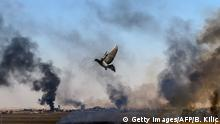 TOPSHOT - Smoke rises from the Syrian town of Tal Abyad, in a picture taken from the Turkish side of the border where a pigeon is seen in Akcakale on October 10, 2019, on the second day of Turkey's military operation against Kurdish forces. - Turkey has vowed to destroy the Syrian Kurdish People's Protection Units (YPG) which controls much of northeastern Syria, and set up a safe zone for the return of Syrian refugees. A total of 70 people were so far reported injured across Turkish areas. Families were evacuating and streets emptying in Akcakale, as local authorities called on people to take shelter. (Photo by BULENT KILIC / AFP) (Photo by BULENT KILIC/AFP via Getty Images)