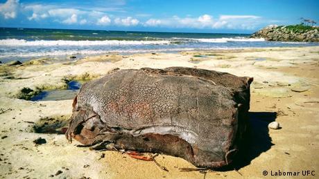 Priča dana Tajanstveni sanduci na brazilskim plažama Na istim brazilskim plažama na koje more već tjednima nanosi naftu, ljudi godinama nalaze čudne sanduke. Potječu li oni s njemačkog broda koji je potonuo 1944. godine?
