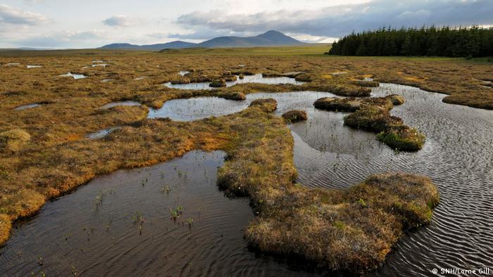 Moore in Schottland