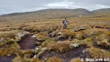 Eroding peat hags at a Peatland Action site at Glenfeshie Estate in the Cairngorms National Park. Sept 2018. ©Lorne Gill/SNH. For information on reproduction rights contact the Scottish Natural Heritage Image Library on Tel. 01738 444177 or www.nature.scot