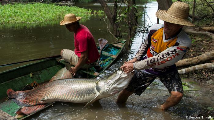 Amazonas Arapaime Fische (Reuters/B. Kelly)