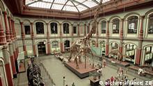 Populärster Ausstellungsraum im Museum für Naturkunde ist der Sauriersaal mit dem weltgrößten Skelett des Brachiosaurus brancai aus der Jura-Zeit, das eine Länge von 23 Metern und eine Höhe von 12 Metern aufweist. Das Museum ist seit 1810 eine Einrichtung der Humboldt-Universität und gilt als eines der größten naturhistorischen Museen der Welt. Seine Sammlungen umfassen etwa 60 Millionen Objekte aus allen Bereichen der belebten und unbelebten Natur. Auf mehr als 6.000 Quadratmetern sind Ausstellungen zur Mineralogie, Paläontologie und Zoologie zu besichtigen. Foto: Hubert Link +++(c) dpa - Report+++