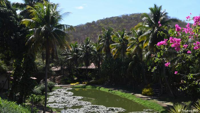 Flores, palmeiras e lago, com colina ao fundo