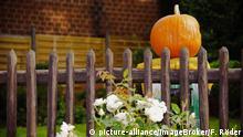 Reifer Kürbis (Cucurbita sp.) hinter einem Gartenzaun | Verwendung weltweit, Keine Weitergabe an Wiederverkäufer.