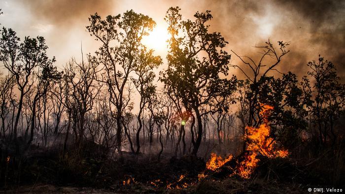 Forest fire in the Cerrado, Brazil