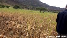 Amhara Disaster and prevention Agency deputy Commisioner, Etagegnehu Adem, said emergency aid disatched to drought hit areas in Waghemra zone.