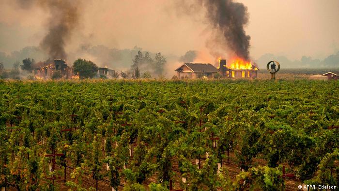 A house near a vineyard burns in California
