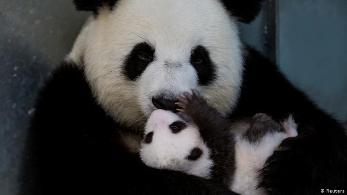 BdTD | Panda Meng Meng mit Nachwuchs (Reuters)