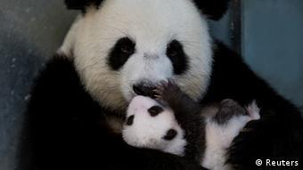 BdTD | Panda Meng Meng mit Nachwuchs