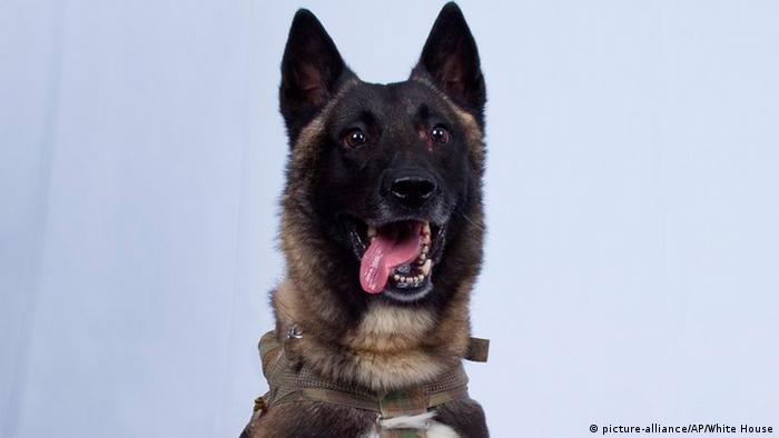 USA Diensthund des Bagdadi Einsatzes in Syrien (picture-alliance/AP/White House)