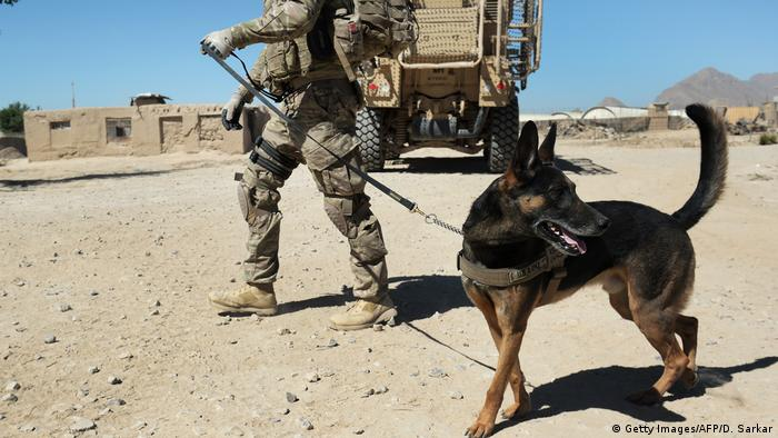 A soldier with a military dog turning its head at something that has caught its attention.