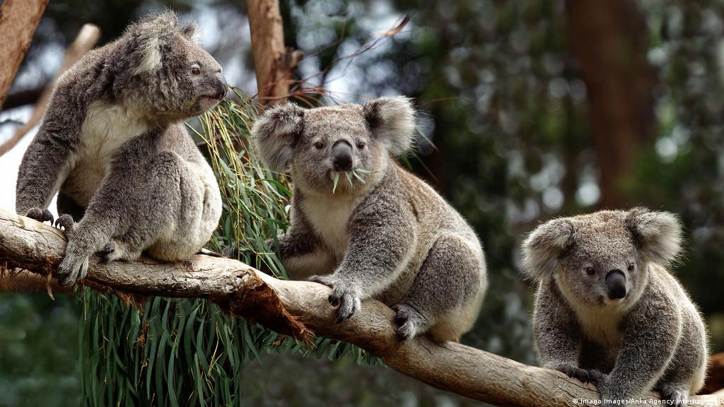 630+ Gambar Hewan Australia Gratis