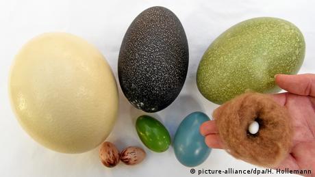 BdT Trick gegen schnelles Auskühlen: Eier in kalten Regionen dunkler (picture-alliance/dpa/H. Hollemann)
