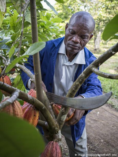 Cocoa farmer in Cameroon