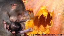 BdT Tierpark Hagenbeck | Halloween bei den Pavianen