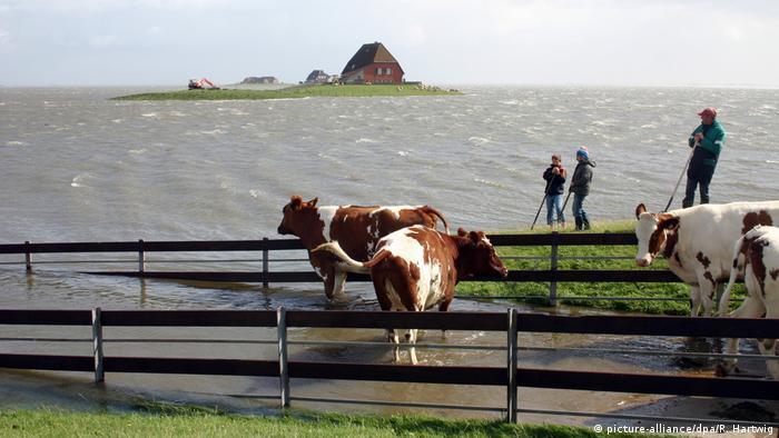 Meeresspiegel steigen schneller Hallig Nordstrandischmoor