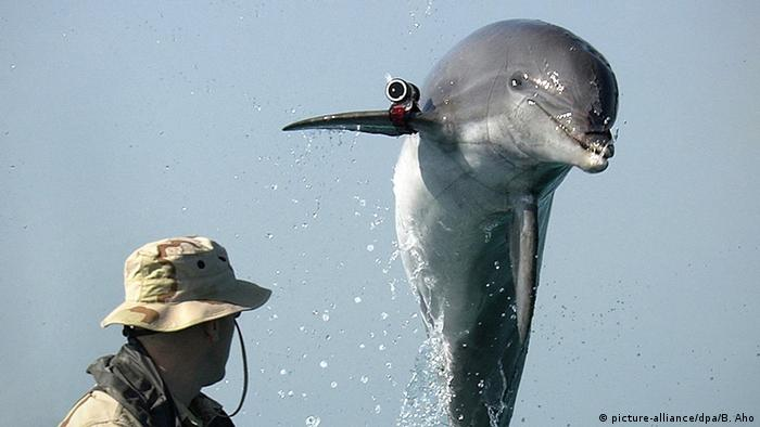 A dolphin with a camera on its fin jumps into the air (picture-alliance/dpa/B. Aho)