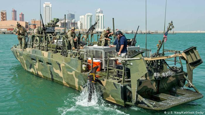 Navy Marine Mammal Program Seelöwen (U.S. Navy/Kathleen Gorby)
