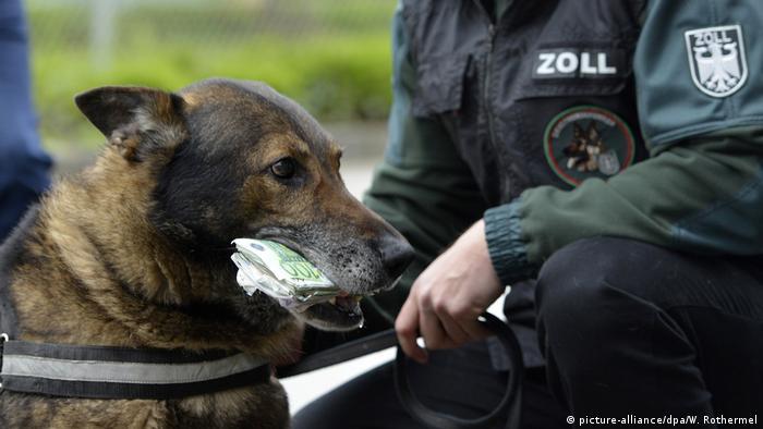 Geldspürhund Rambo (picture-alliance/dpa/W. Rothermel)