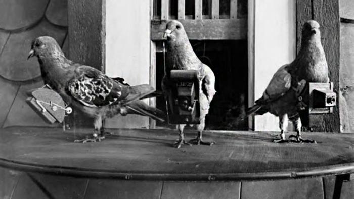 Tauben mit Kameras Luftbildaufnahmen